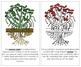 Peanut Plant Nomenclature Book - Red