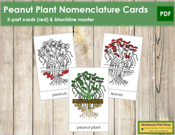 Peanut Plant Nomenclature Cards - Red