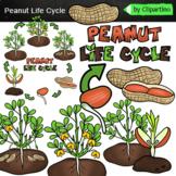 Peanut life cycle clip art