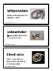 Pearson ReadyGen Grade 5 Benchmark Vocabulary Cards