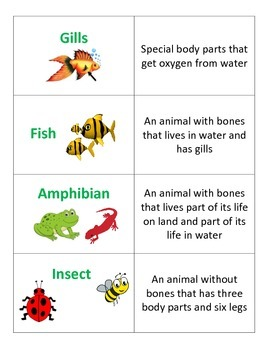 2nd Grade Science Vocabulary Flashcards