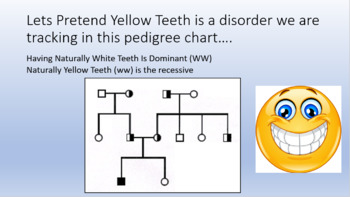 Pedigree Chart Practice and Review Worksheets + Online Activity (Genetics)