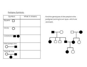 Pedigree Chart notes
