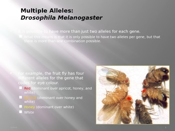 Pedigree Charts and Multiple Alleles