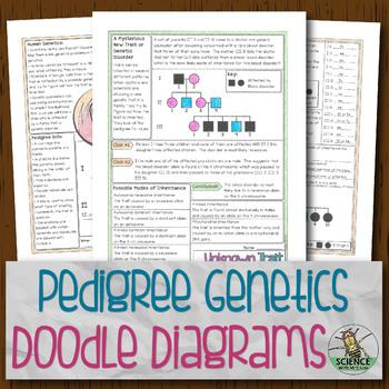 Pedigree Genetics Doodle Diagrams