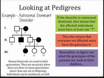 Pedigree Notes PowerPoint Presentation