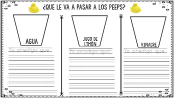 Peep Experiment in Spanish