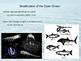 Pelagic Open Ocean Powerpoint Slides