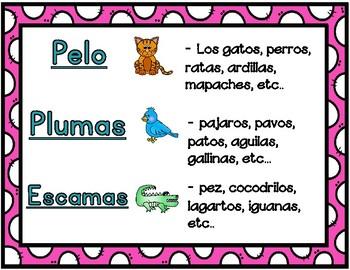 Pelo, Plumas, Escamas: Spanish Animal Coverings Sorting Center