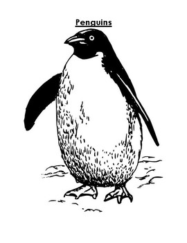 Penguin Article and Coloring Worksheet
