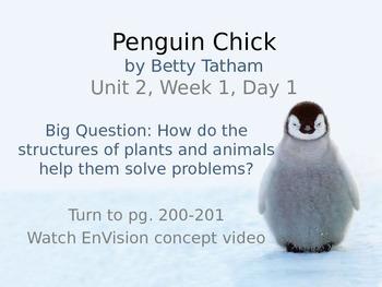 Penguin Chick PowerPoint Reading Street 3.2.1