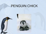 Penguin Chick - Treasures Reading - Main Idea and Supporti
