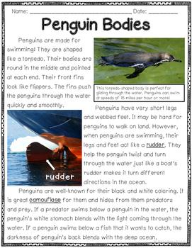Penguin Close Reads