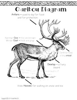 Reindeer / Caribou and Penguin Non-Fiction Text and Activity FREE!
