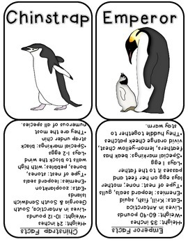Penguin Fact Cards