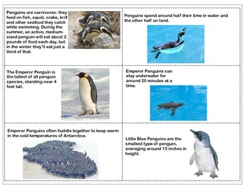 Penguin Fact Cards-Circle Time, Centers & Games- Non-Fiction Learning