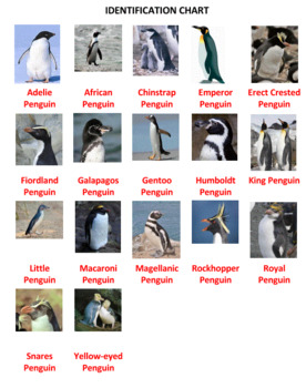 Penguin Identification by Flow Chart