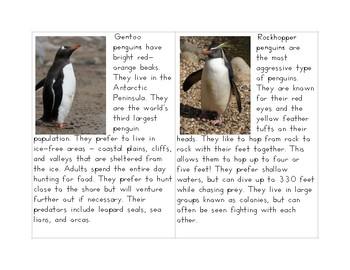 Penguin Information Cards