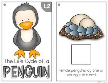Penguin Life Cycle Adapted Book { Level 1 and Level 2 } Life Cycle of a Penguin
