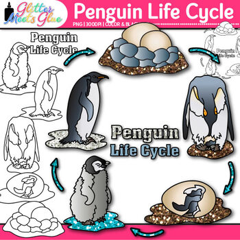 Penguin Life Cycle Clip Art | Teach Animal Groups, Habitats, and Adaption