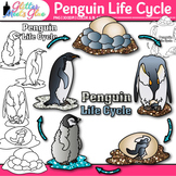 Penguin Life Cycle Clip Art {Teach Animal Groups, Habitats