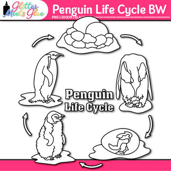 Penguin Life Cycle Clip Art {Teach Animal Groups, Habitats, and Adaption} B&W