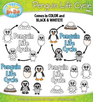 Penguin Life Cycle Clipart {Zip-A-Dee-Doo-Dah Designs}