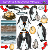 Penguin Life Cycle Clipart