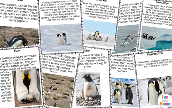 Penguin Life Cycle and Penguin Animal Study