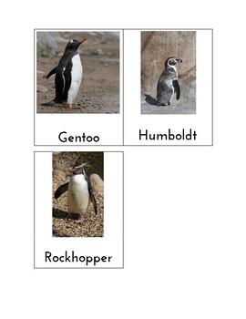 Penguin Matching Cards - Montessori