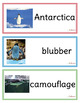 Penguins Non-Fiction Packet for Autism and Special Education