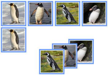 Penguin Photo Matching Cards