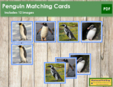 Penguin Matching Cards