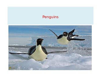 Penguin PowerPoint