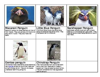 Penguin Species Cards