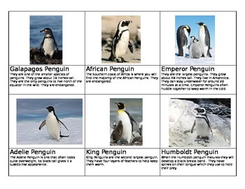 Penguin Species Cards