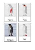 Penguin Three Part Cards