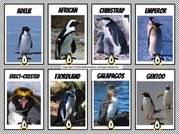 Penguin Facts Trading Cards