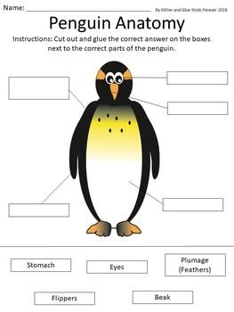 Penguin Facts Unit
