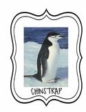 Penguin Unit Primary Grades Worksheets, Projects, Pictures, Unit Test