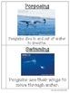Penguin Vocabulary Interactive Book