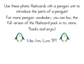 Penguin Vocabulary and Photo Flashcards