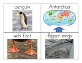 Penguin Vocabulary and Photo Flashcards