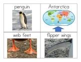 Penguin Vocabulary and Photo Flashcards - Full Set