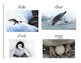 Penguin Vocabulary and Photo Flashcards - Full Set