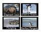 PENGUIN Word Wall Cards {Real Photographs of Penguins}