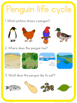 Penguin life cycle circle time questions