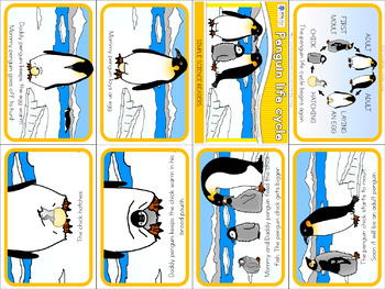 Penguin life cycle mini book (simplified version)