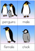 Penguin life cycle nomenclature cards