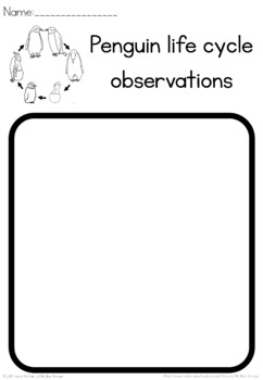 Penguin life cycle observation sheet